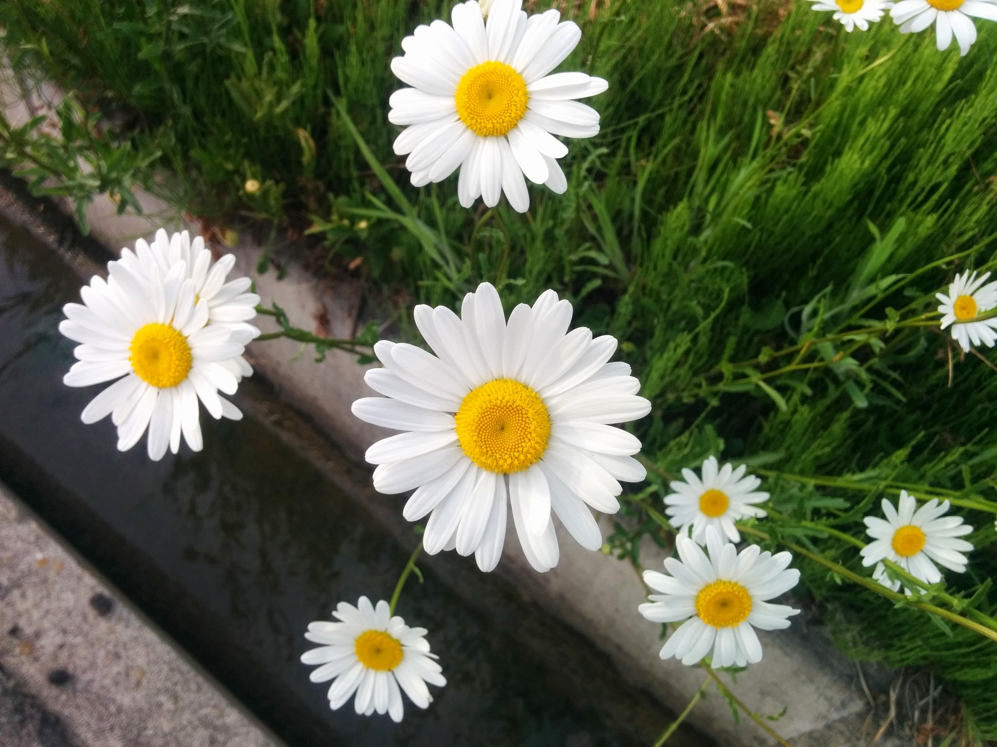 IMG_20150516_165830