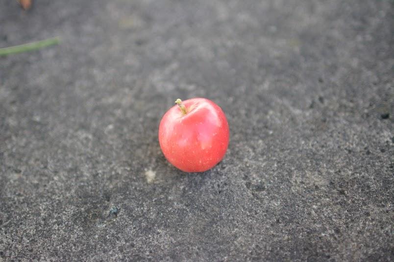 サンファームとうみ リンゴ