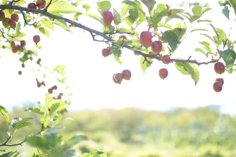 サンファームとうみ りんごのある風景