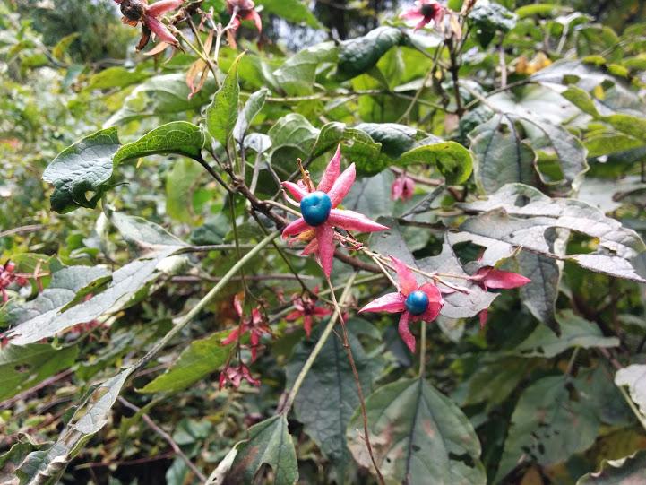 上田市 太郎山 変わった植物